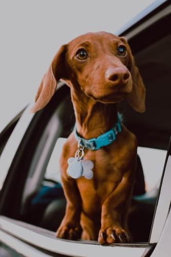 Hund, Hundebox