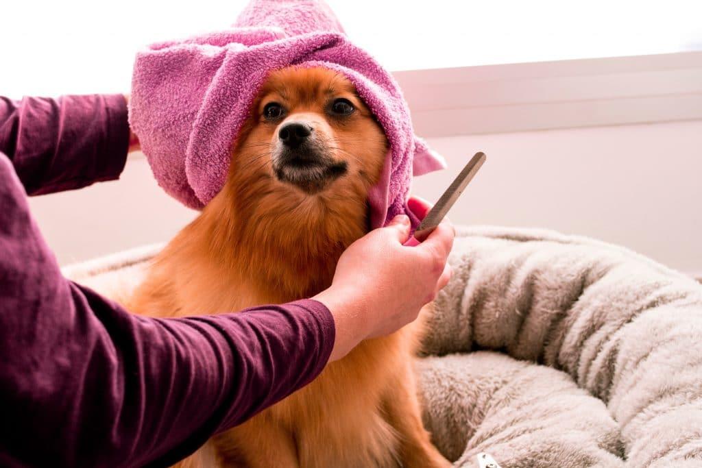 Welpenpflege, Hundeshampoo