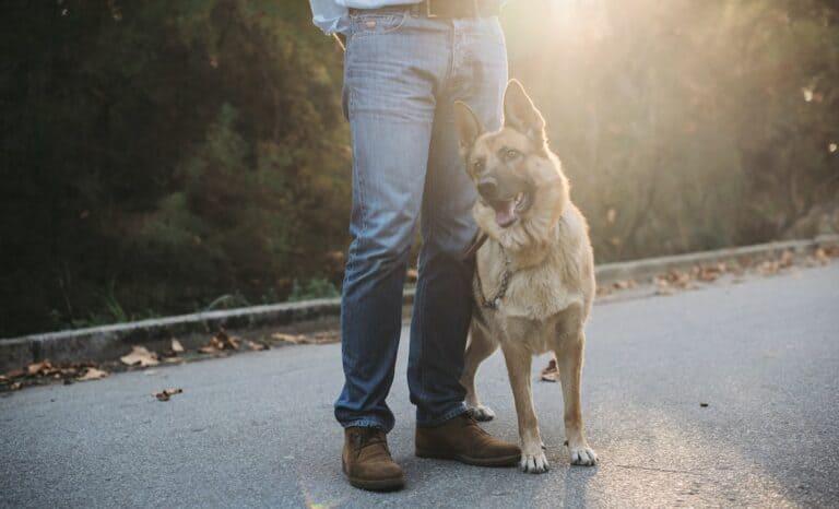 Hundeerziehung ohne Stress
