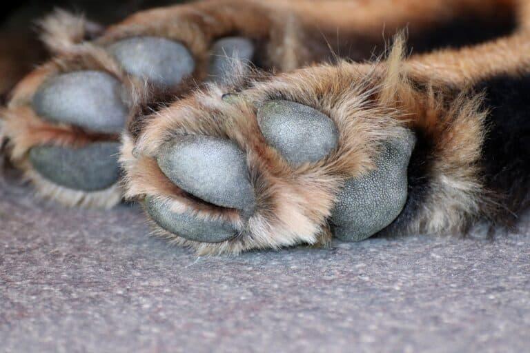 Hundepfoten Pfotenschutz
